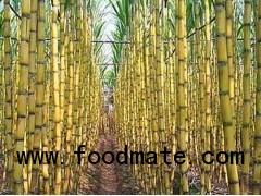 Sugar cane juice concentrate