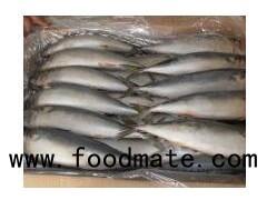 Frozen Mackerel Fish (200-300G/25cm+)