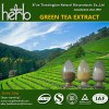 Green tea extract powder