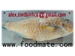 frozen parrotfish wgs, grouper fillet