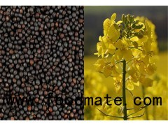 canola oil seeds with Canada standard