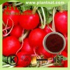 Red Beet Powder, Halal Red beet root extract, Beetroot Extract P.E.