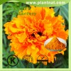 high quality lutein, marigold flower extract