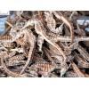 Dried seahorse