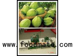guava processing plant