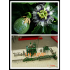 passionflower processing plant