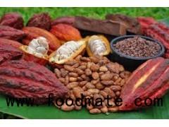 Cacao bean, cacao nibs. Tel/ whatsapp/ viber/ kakaotalk: 0084 907 886 929