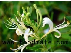 Honeysuckle Extract Chlorogenic acid