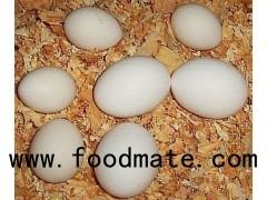 Chicken Broiler Hatching(Ross/Cobb) Grade A