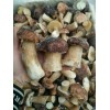 Frozen boletus edulis(porcini) whole
