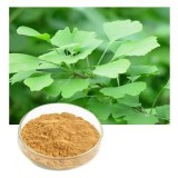 Best Ginkgo Biloba Extract Powder Suppliers