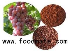 Grape Seed P.E,95%,98%