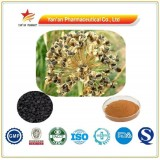 China 100% Natural Leek Seed Extract Powder/Tuber Onion Seed Extract/Semen Allii Tuberosi P.E.
