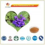 Herb Plant Ajuga Turkestanica Extract Turkesterone
