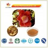 GMP Factory Supply Miquel Linden Flower Extract/Tilia Miqueliana Maxim