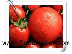 direct factory production high quality canned tomato paste