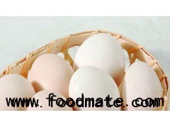 dried egg white protein albumen powder