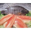 Frozen Black Tilapia Fillet