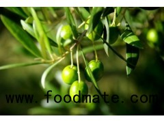Botanical Extract, Herbal Extract, Plant Extract,natural Ingredients Olive Leaf Extract, 32619-42-4