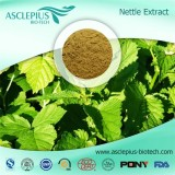 Nettle Root Extract Powder Supplier Wholesale