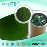 Spirulina Extract Powder,spirulina Protein Supplier Wholesale