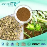 Tribulus Terrestris Extract Supplement Supplier Wholesale,Polysaccharide,Tribulus Alatus Extract