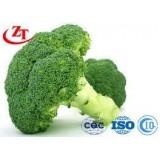 Green Raw Broccoli Like A Vegetable
