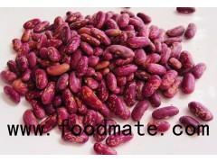 New crop2016 Dark Red Kidney Beans/ DRKB/ RAJMA for sale
