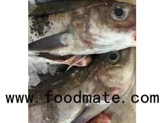 Frozen Atlantic Cod/Atlantic Cod Fillets/cod fish