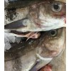 Frozen Atlantic Cod/Atlantic Cod Fillets/cod fish