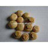 Nutritious Tin Canned Mushroom 400g