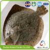 IQF Frozen Turbot