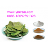 Lotus Leaf Extract Nuciferine