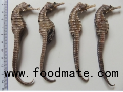 Dried Sea Horse for sale (Cheap and wonderful prices)