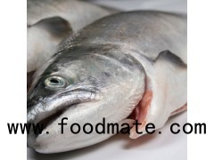 Frozen Whole Salmon Fish
