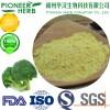 sulforaphane broccoli seed extract broccoli extract broccoli sprout extract manufacturer