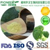 broccoli seed extract sulforaphane broccoli extract broccoli sprout extract manufacturer