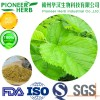 100% natural 1-DNJ Mulberry leaf extract manufacturer