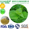 white Mulberry leaf extract 1-DNJ widely used in weight loss supplement
