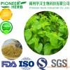 great quality 1-DNJ Mulberry leaf extract with cheaper price