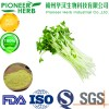 professional manufacturer of broccoli sprout extract sulforaphane with 10 year's experience
