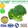 natural broccoli extract sulforaphane has strong anti-oxidation and detoxification
