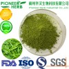 great quality Matcha powder with cheaper price
