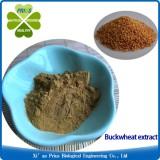 Buckwheat Extract Lowering Blood Pressure Herbal Extract