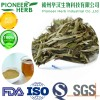 good quality instant white tea powder with cheaper price
