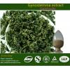 Gynostemma Pentaphylium Extract