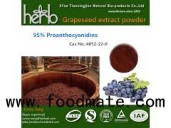 Grape Seed Extract Vitis Vinifera L.