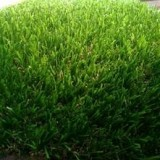 Non Filling Soccer Field Grass Carpet