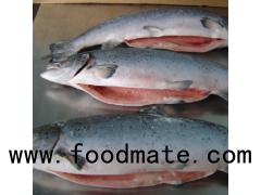 Fresh Norwegian Salmon/ Atlantic Salmon Fish / Cheap Fresh Salmon