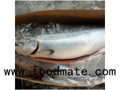 frozen pink salmon fillets frozen salmon fish frozen salmon fillet